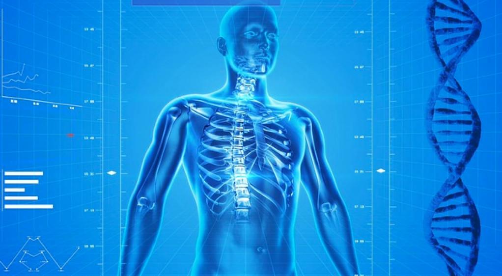 kroppens signaler