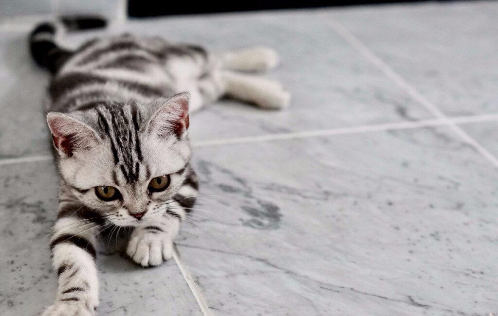 mini kat